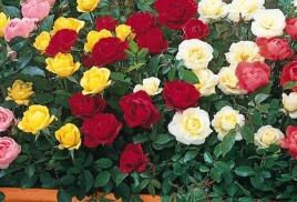 Вологда цветы людмила